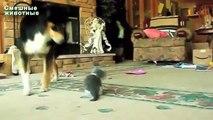 Os cães grandes que jogam com os gatinhos. Cães e cachorros