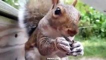 Ecureuil ici. Graines drôle d'écureuil de craquage