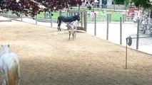 Malvern family rescues donkeys Animals World