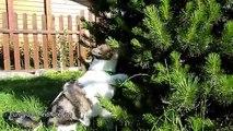Cat Rocky began preparing for Christmas