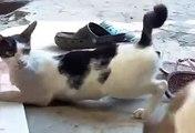 Cat breakdance funny amazing