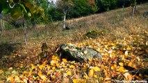 Autumn Landscape - Peisaje de toamna 720p