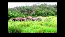 African Animals   Elephants Documentaries   African Elephants   Animal Videos   Forest Animals (4)