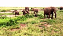 African Animals   Elephants Documentaries   African Elephants   Animal Videos   Forest Animals (6)