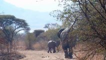African Animals   Elephants Documentaries   African Elephants   Animal Videos   Forest Animals (8)