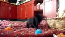 Animal Videos   Animals   Dog - Animal   Puppy Dog   Puppies   Puppy Dogs   Dogs Video   Pets (2)