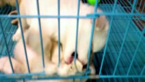 Animal Videos   Animals Feeding   Dog - Animal   Puppy Dog   Puppies   Puppy Dogs   Dogs Video (2)