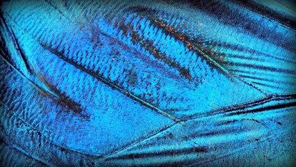 Un papillon solaire