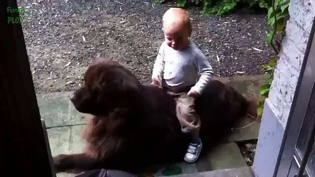 Funny Babies Riding Dogs Compilation 2015 [NEW HD]