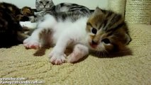 Cutest Cat Moments. Applause! I am Cutest Cat Rocky!