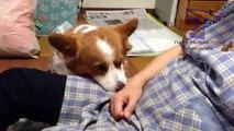 Comparação engraçada de cães e gatos - Coleção dos animais engraçados