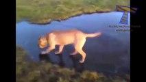 Animaux drôles sur la glace - de drôles d'animaux (collecte)