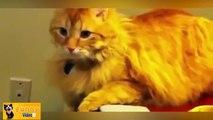 Funny Cats Compilation Lustige Katzen Zusammenstellung Chats Drôles Compilation