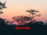 Safari Game Drives 6 & 7: Rhino, Impala, Lion, Wildebeest, Giraffe, Kapama Reserve, South Africa