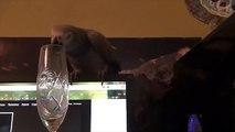 O que os sons podem fazer o papagaio papagaio engraçado