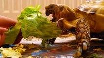 ¿Cuál es el uso de las tortugas divertidas Tortugas