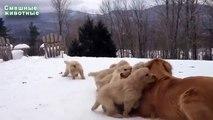 Perros de invierno y gatos. Gatos y perros jugando en la nieve