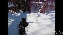 Hiver - saison préférée des chats et des chiens. Chat et de chien dans la neige