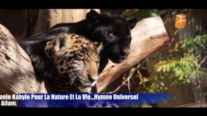 Symphonie Kabyle Pour La Nature Et La Vie.... Hymne Universel À l'Environnement , Par Xaled Ailam