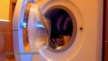 Funny Cats and Washing Machine
