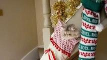 Les chats se déguisent pour les fêtes de Noël dans une pub