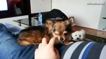Funny Angry Dogs Barking And Growling Compilation 2014 - Dog Barking Videos