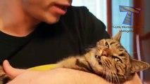Los gatos se niegan caricias y besos - diversión y gatos divertidos (compilación)
