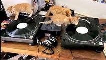 Disc-jockeys de chatons. Trois chaton drôle