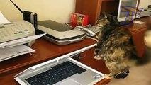 Chats contre les imprimantes - chats amusants et drôles (collecte)