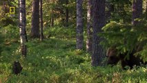 [National Geographic] Wild Russia - Primeval Valleys HD (Nature Documentary)