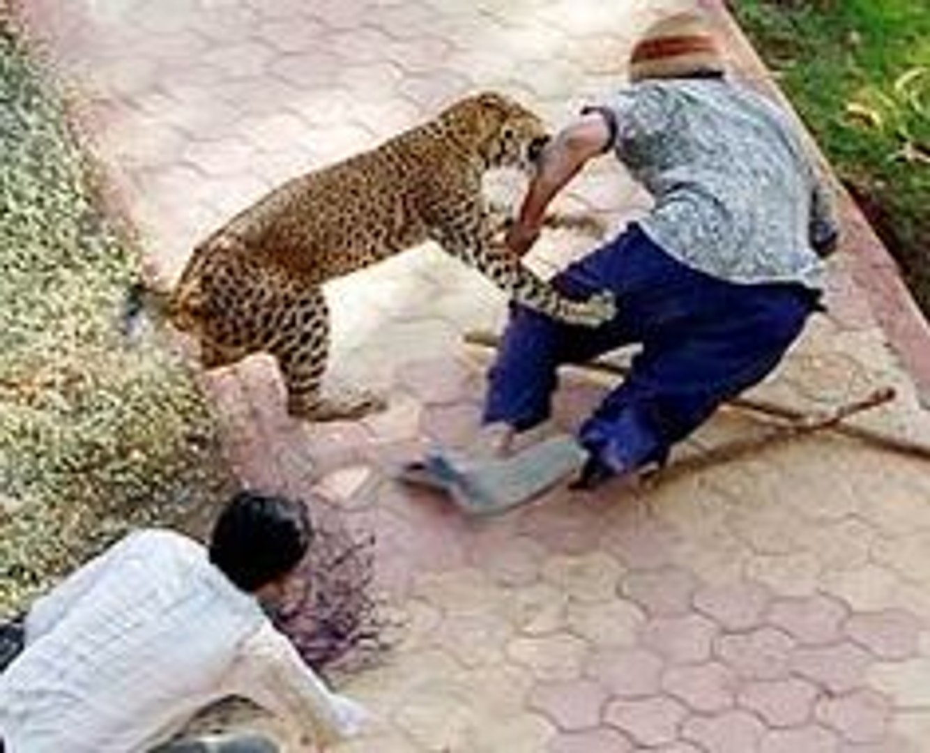 Lions DEADLY ATTACK on ANIMALS - Lions fighting to death Wild HQ Lions Most Powerful and Dangerous A