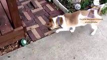 Cães e gatos têm medo de bugs. Os animais engraçados (coleção)