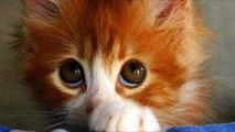Chats sentir coupable - chats drôles coupables (de collecte)