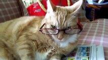 Chats et chiens portent des lunettes - collection ludique et drôle d'animaux