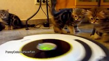 Kittens Cleans The Kitchen on a Roomba  Funny Cats