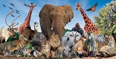 Male Lion vs Black Bear_Man VS Donkey Best Wild Animal Videos   Animal Attacks And Loves when animals attack