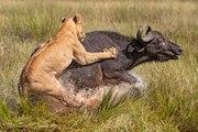 Anaconda vs Mongoose_Man VS Donkey Best Wild Animal Videos   Animal Attacks And Loves when animals attack