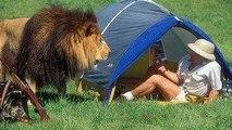 Animal Fights - Animal Wild Attack - Lion vs Tiger vs Buffalo vs Hyena -  Wild Animal CROCODILE A FIERCE ATTACK deer Safari2 NEW@croos Best Animal Fights