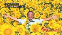 【福島ひまわり里親プロジェクト】プロジェクト概要 - 希望のチカラ