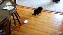 Ice cubes against puppies. Funny puppy playing with ice cubes