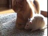 Les rats aiment le chat. Amis de rat drôle avec un chat