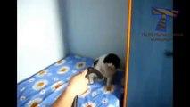 Top chats drôles et mignons et chats - vidéos drôles (collecte)