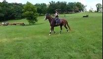 Un cheval hésitant saute un obstacle