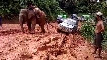 Un éléphant dépanne un 4x4 embourbé