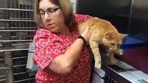 Un chat retrouve sa famille huit ans après sa disparition