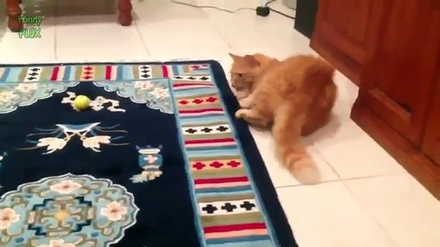 Funny Spazzy Cats Compilation 2015 [HD]
