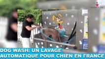 Dog Wash: un lavage automatique pour chien en France! À découvrir dans la minute chien #63