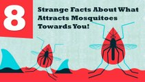 What Attract Mosquitoes To Bite Humans & How to Prevent Them– Mosquito Repellent