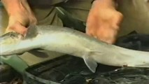 Go Fishing John Wilson - Salmon - video dailymotion