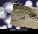 Cat vs Snake -  Cat Kills the Snake